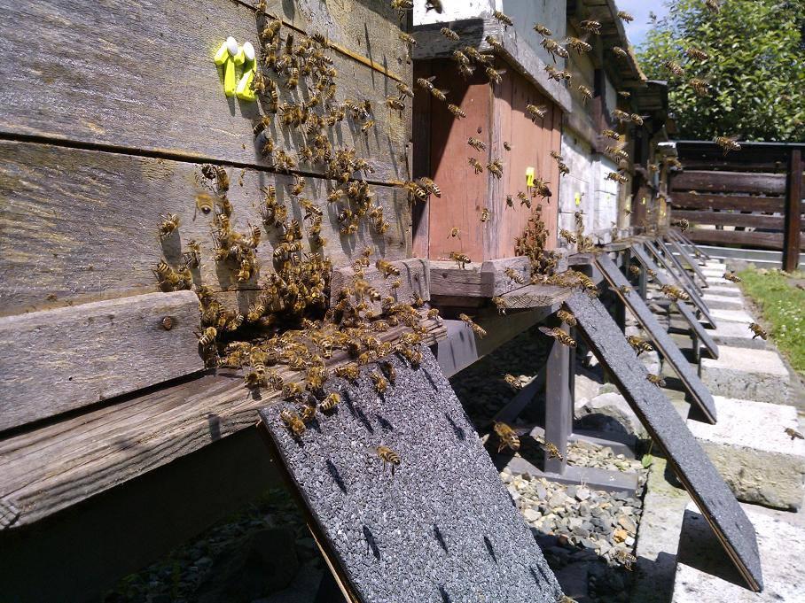 moje-pszczoly